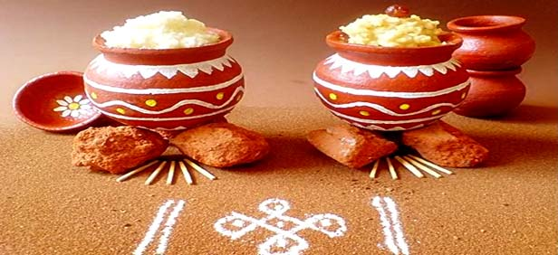 significance of pongal festival enjoy delicious food and