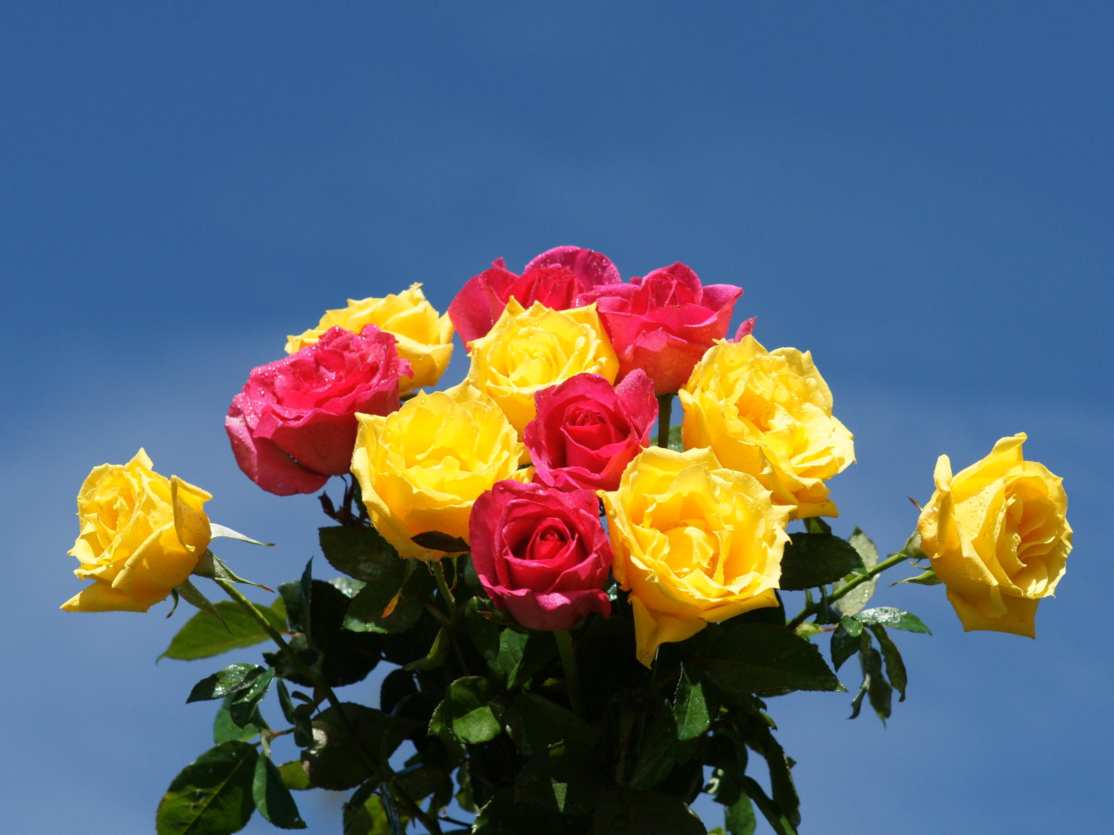 Yellow And Pink Roses With Vizagfood