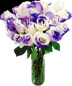 rainbow-purple-roses-2